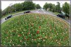 Tulpen drive in