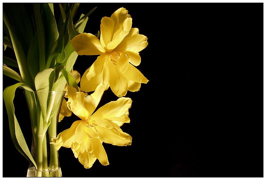 ?!Tulpen!?