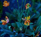 Tulpen für Euch