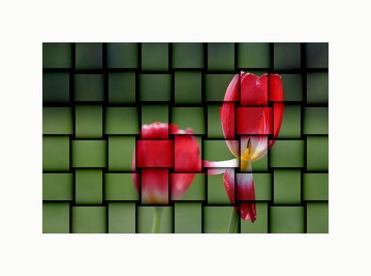 Tulpen geflochten