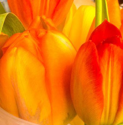 Tulpen im Dreiklang