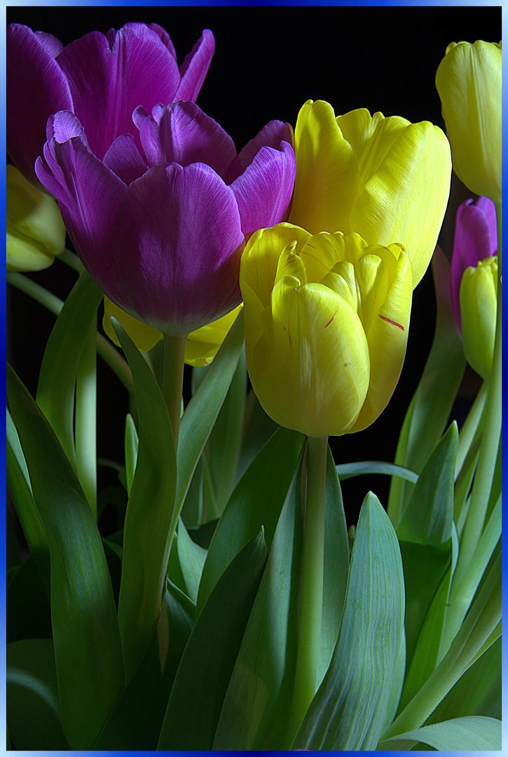 Tulpen in der Vase 1