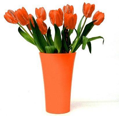Tulpen in Holländische Nationalfarbe Orange.