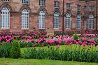 Tulpen in Savern