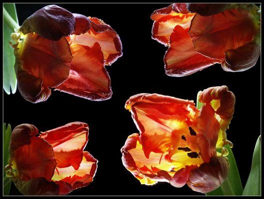 Tulpen mal 4
