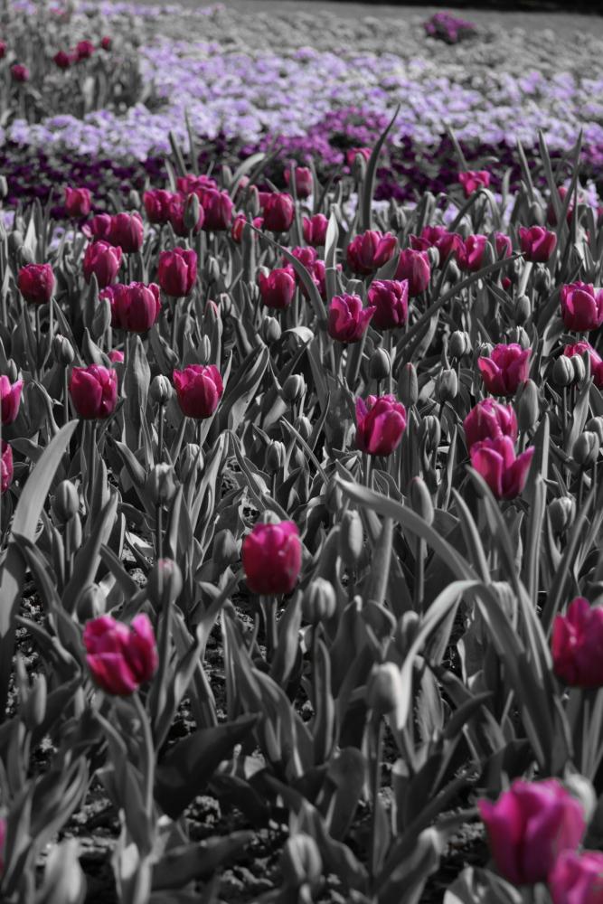 Tulpen mal anders
