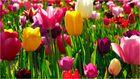 Tulpen Meer