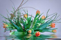 Tulpen - Meer