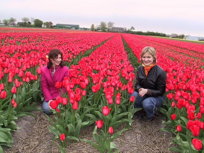 Tulpen-Meisjes