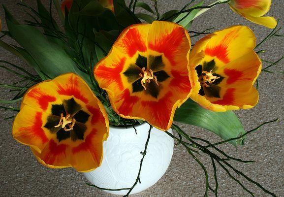 Tulpen mit Einblick