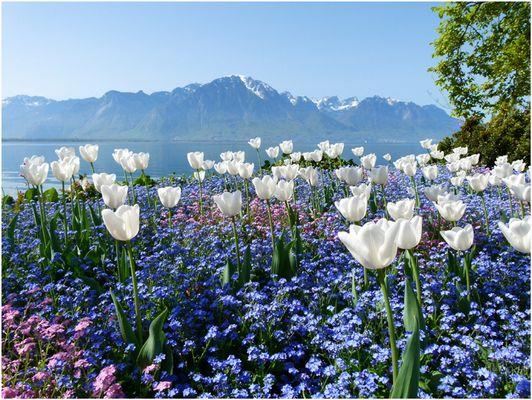 Tulpen mit schönster Aussicht