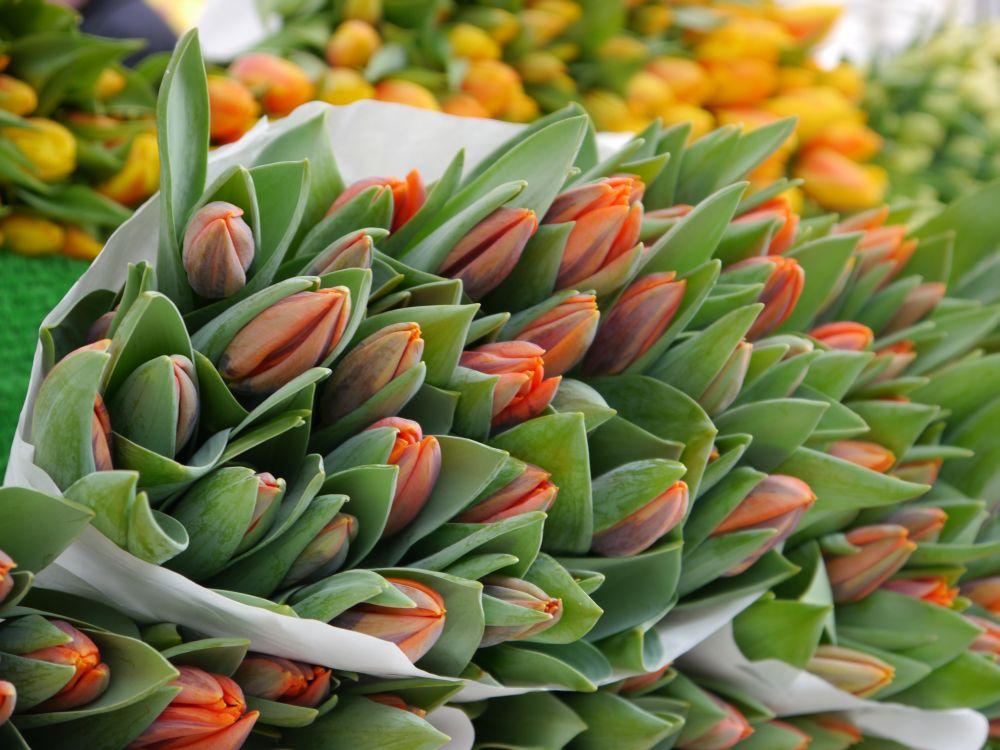 Tulpen orange & gelb