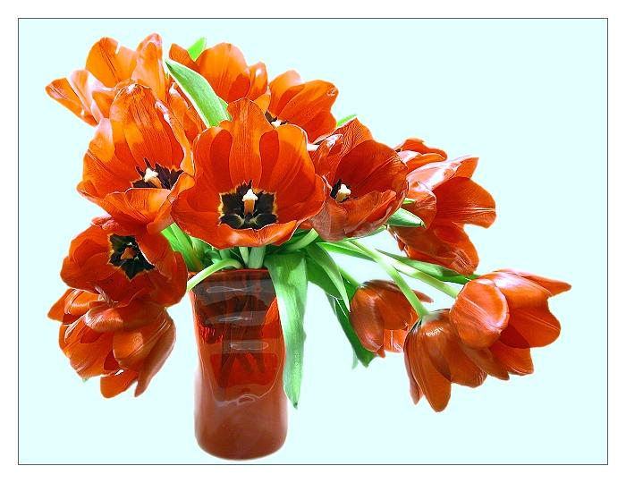 Tulpen, so rot.....
