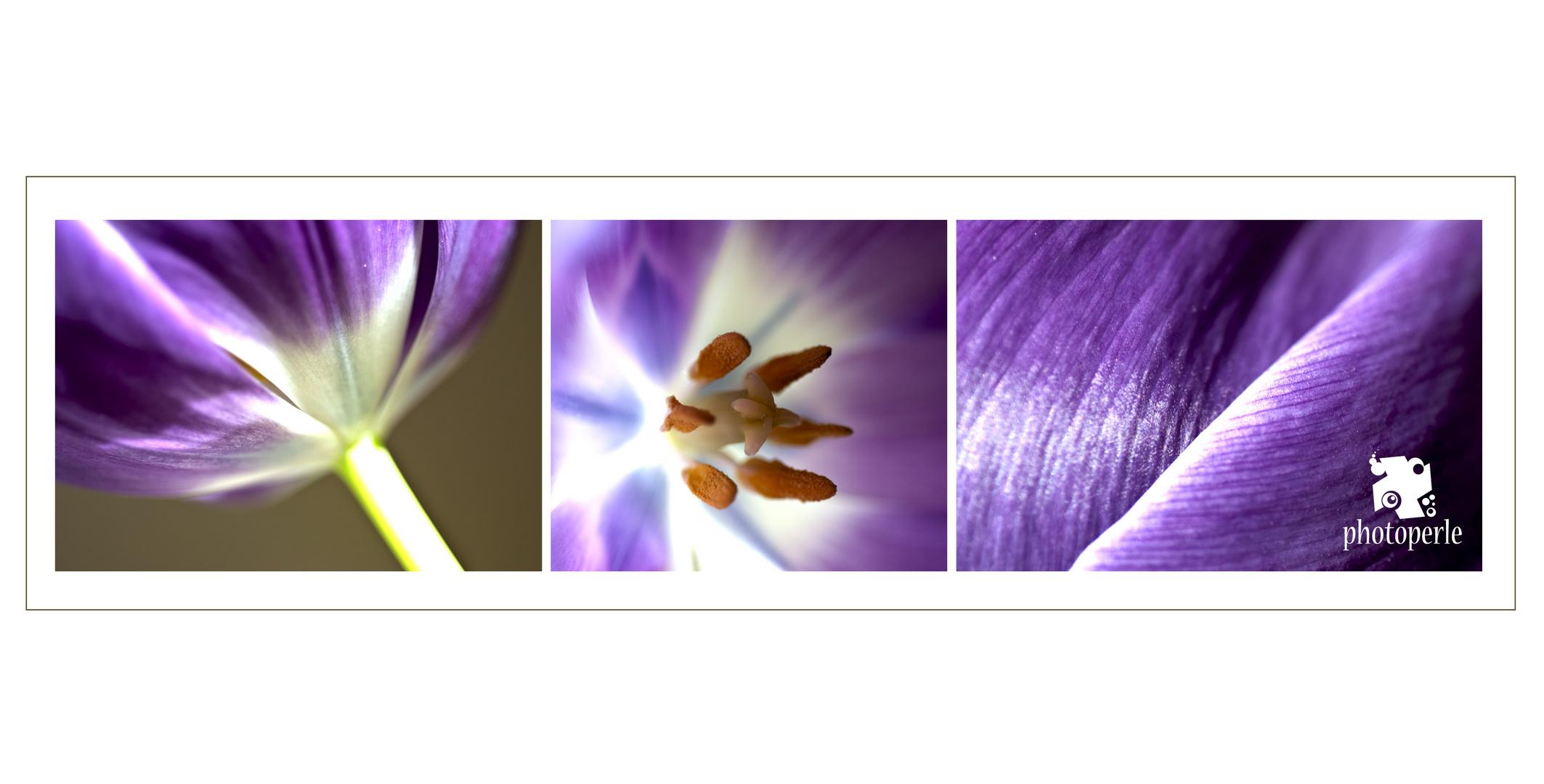 Tulpen - Stillleben