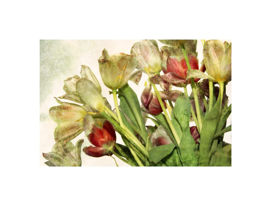 Tulpen Teil 1