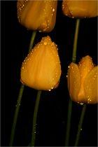 Tulpen Tropfen