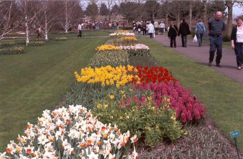 Tulpen usw......