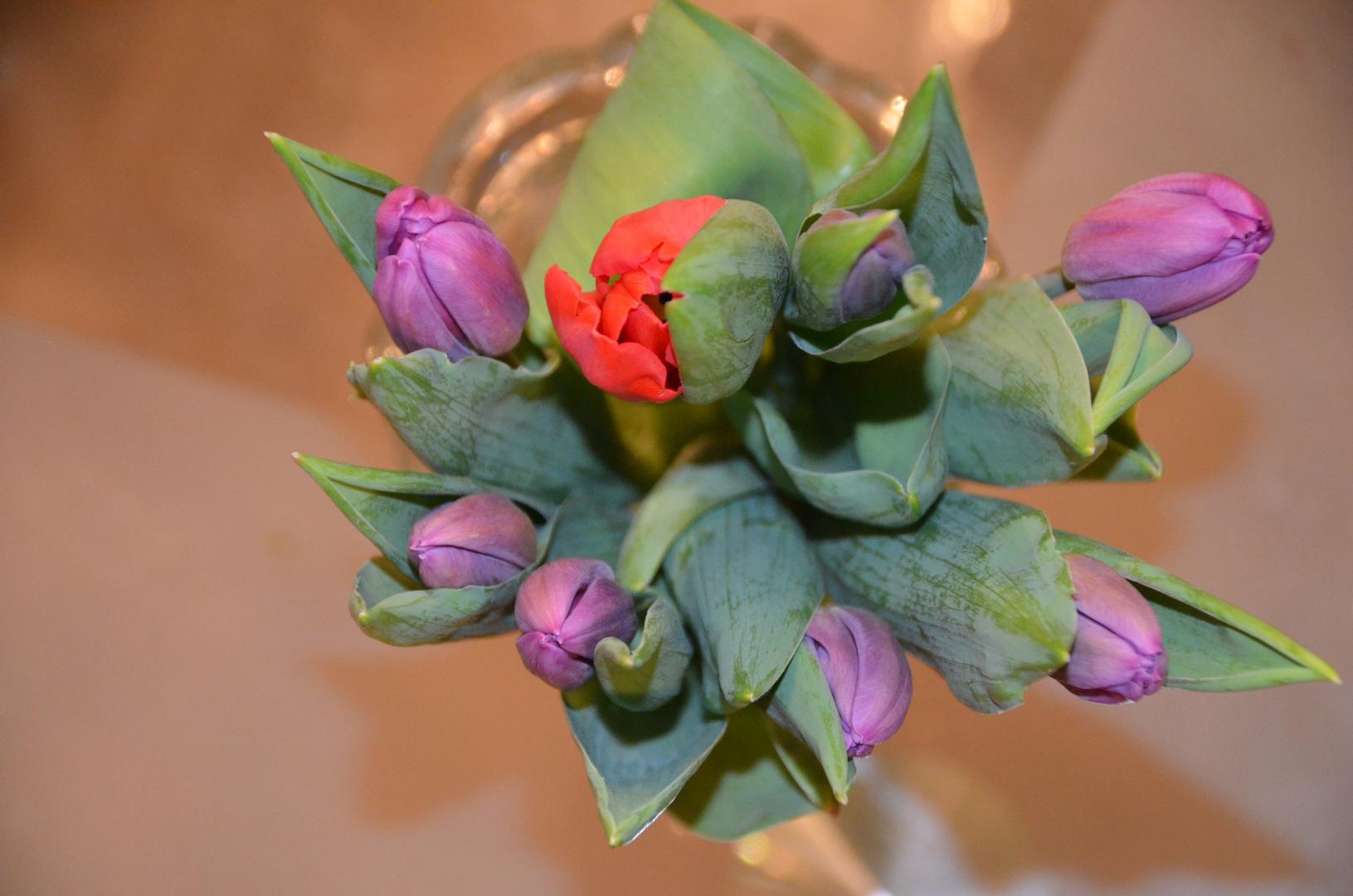Tulpen - von ganzem Herzen..