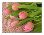 Tulpen zu Ostern.....