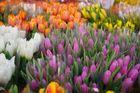 Tulpen zum Verkauf