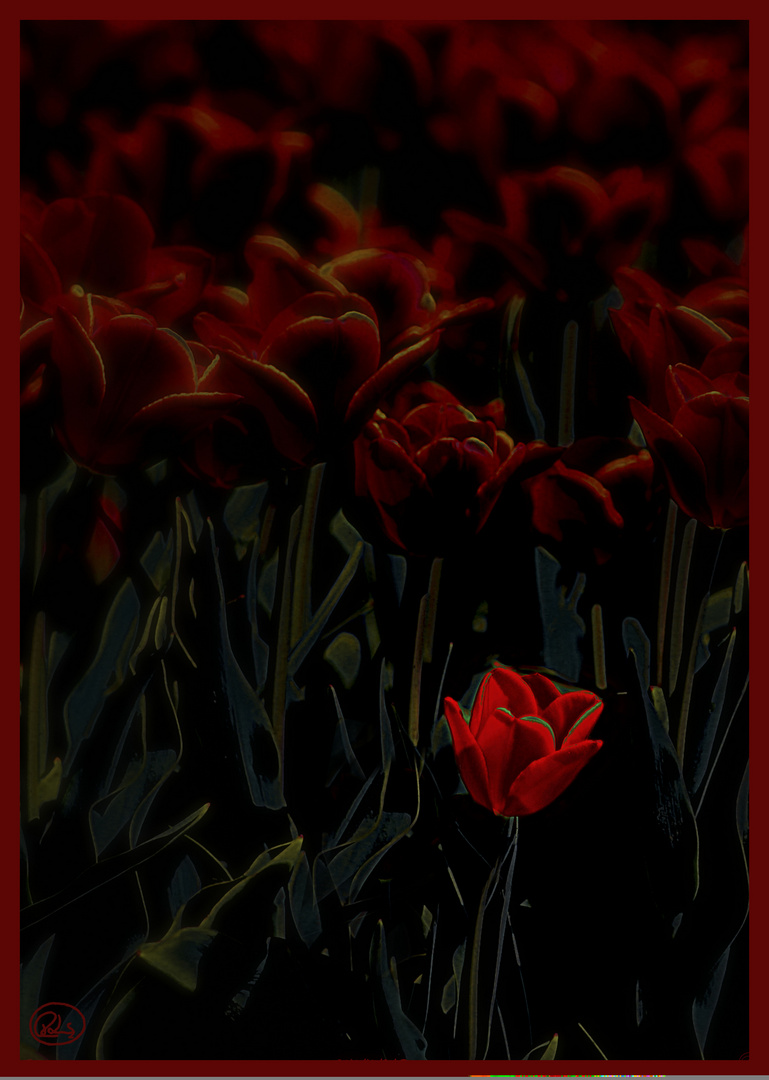 Tulpen##'2