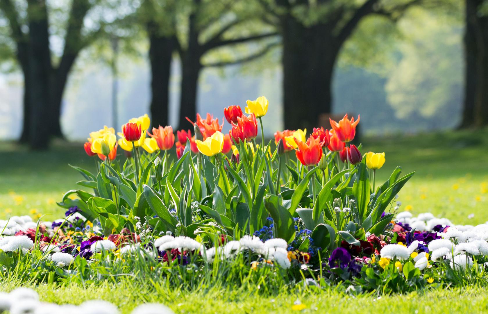 Tulpenbeet in der Lichtentaler Allee (Baden - Baden)