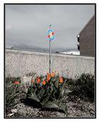 Tulpenbeet vor Garagenwand