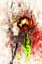 Tulpenbild