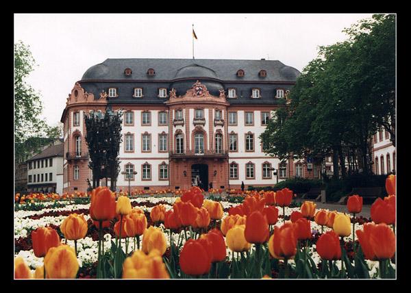 Tulpenblühen in Mainz