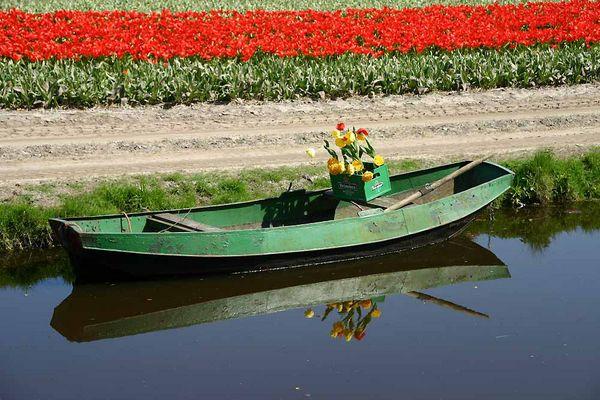 Tulpendurst