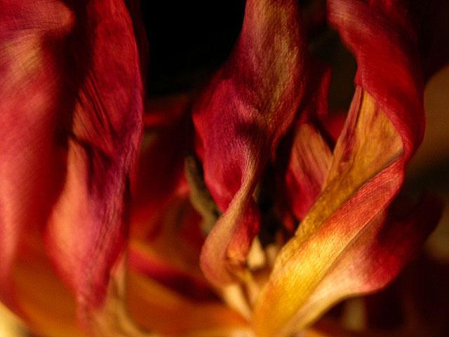 Tulpenfeuer oder: Das Leben ist ein einziger Korb