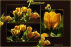 Tulpenfreude(n)
