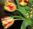 Tulpengruß zum Wochenende