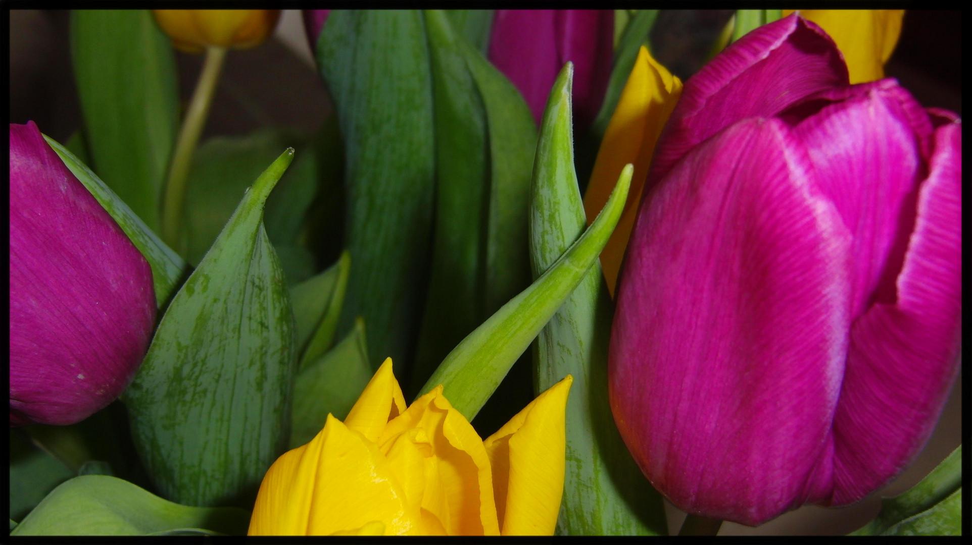 Tulpenkreation