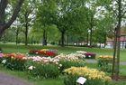 Tulpenrabatte im gräflichen Park Bad Driburg