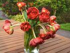 Tulpenstrauß zum Mittwoch