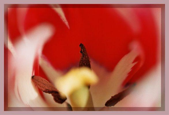 Tulpenstrudel