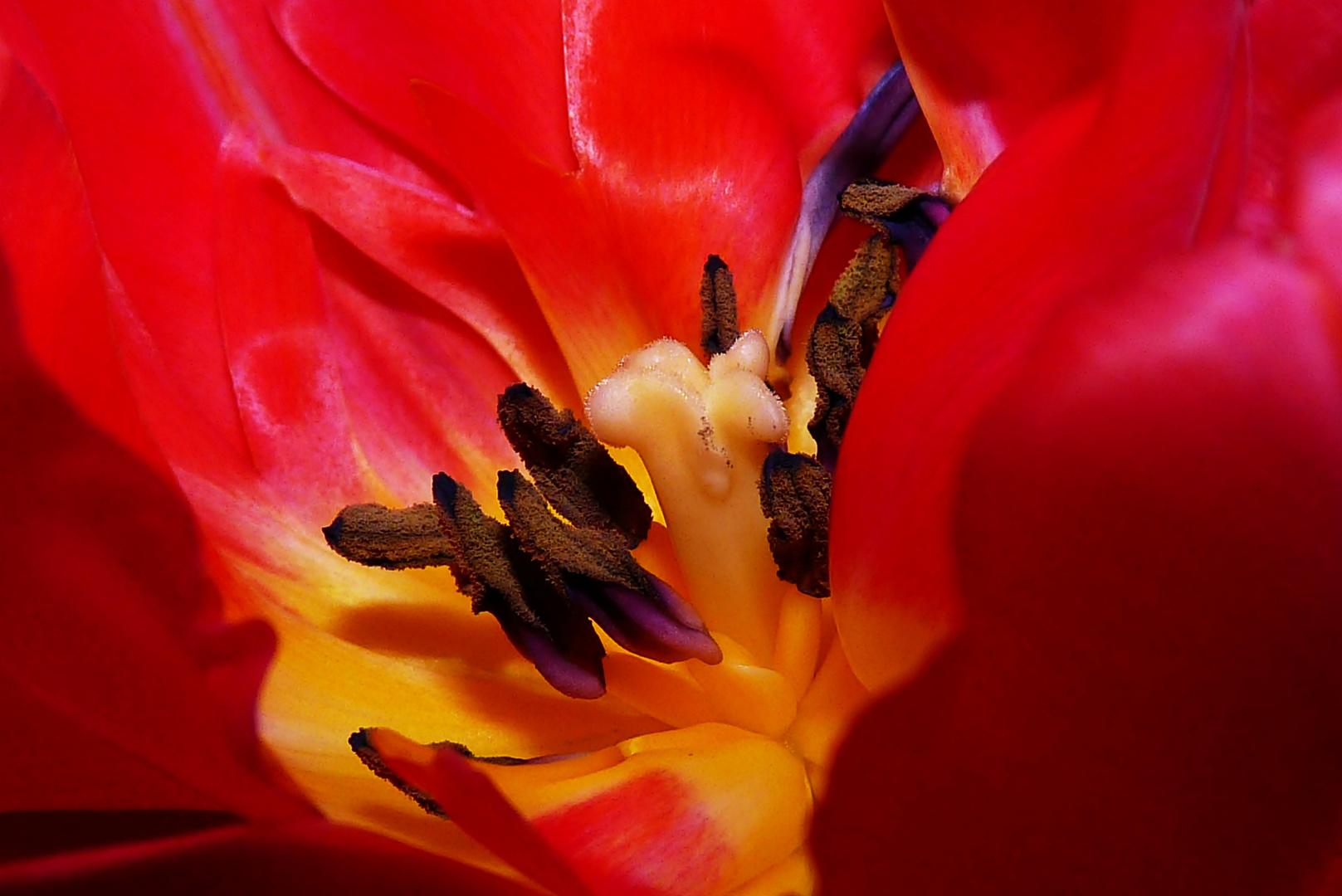 Tulpenuniversum