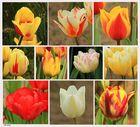 Tulpenvielfalt