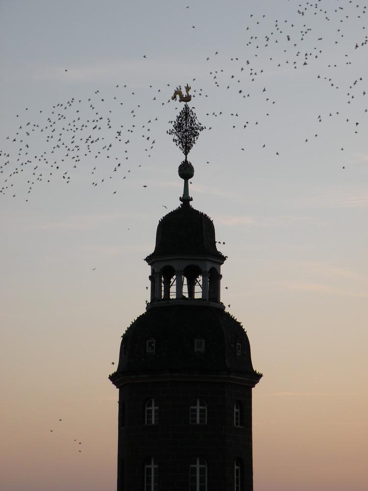 Tummelplatz für Vögel