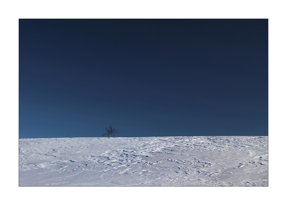Tundra Finland
