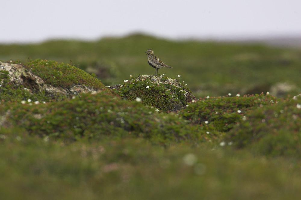 Tundra....der lange Weg zum guten