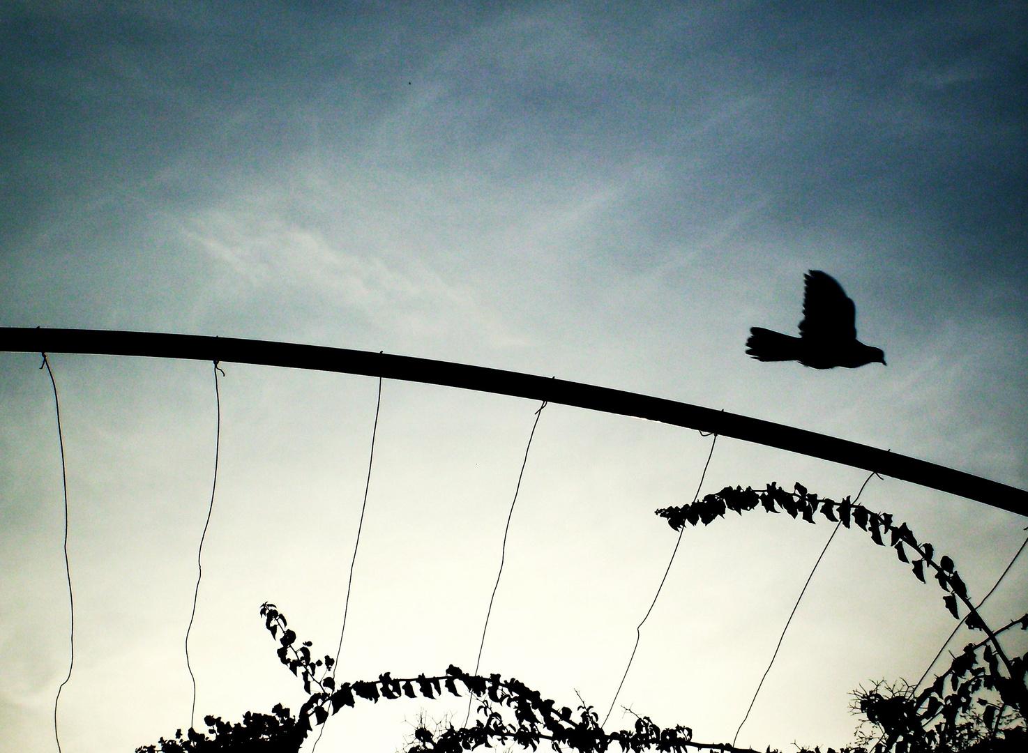 Tunesischer Vogel