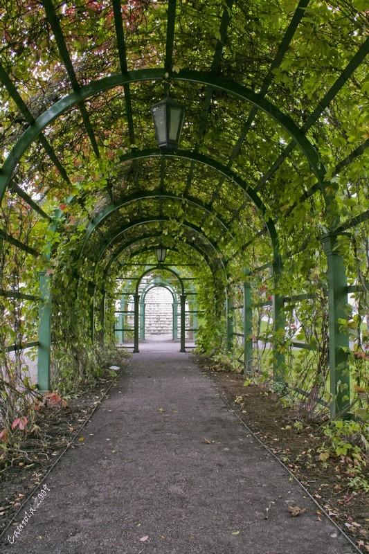 Tunnel de verdure