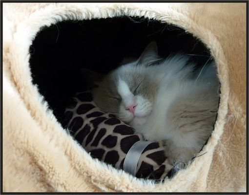 Tunnelschlaf
