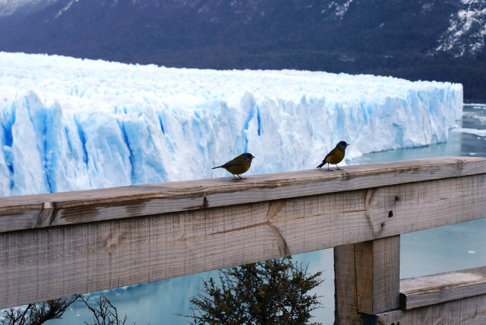 Turistas en el Perito Moreno-Argentina