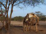 Turkana II