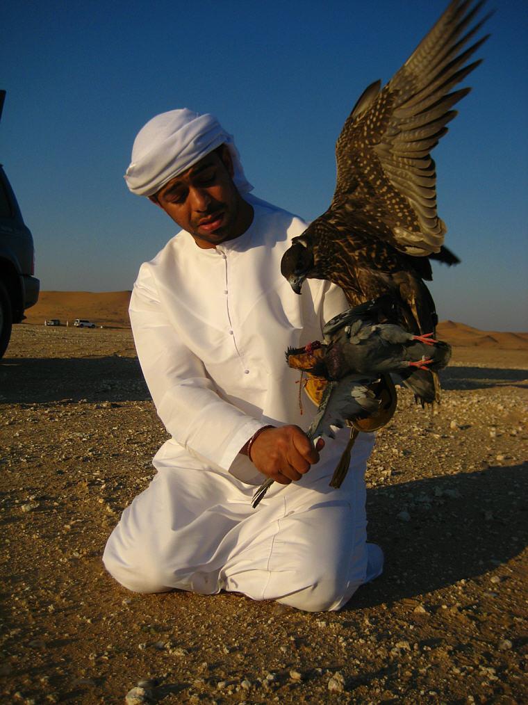 Turkis Falcon