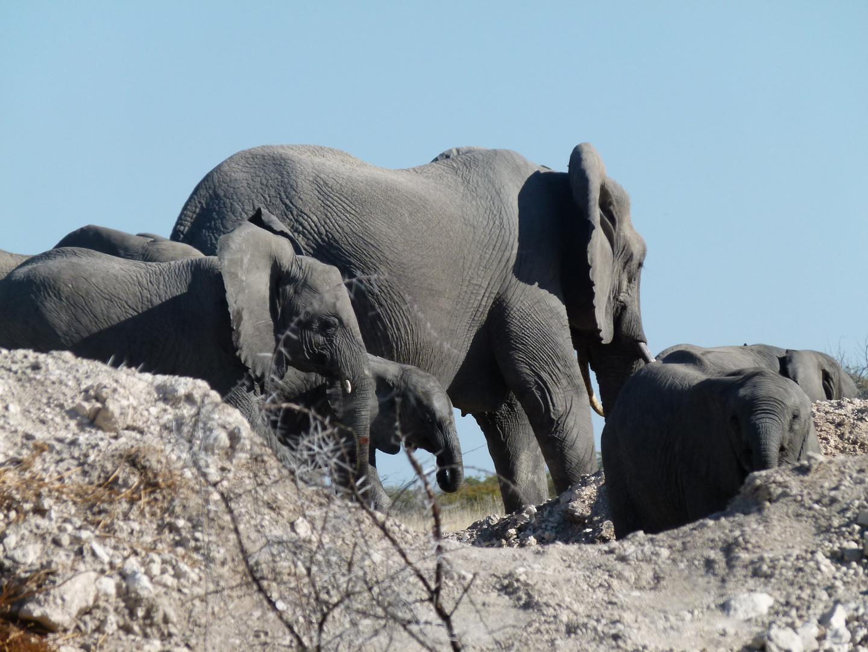 Turm der Elefanten