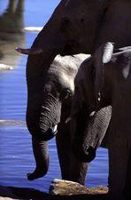 Turm der Elefanten oder Elefantenpuzzle